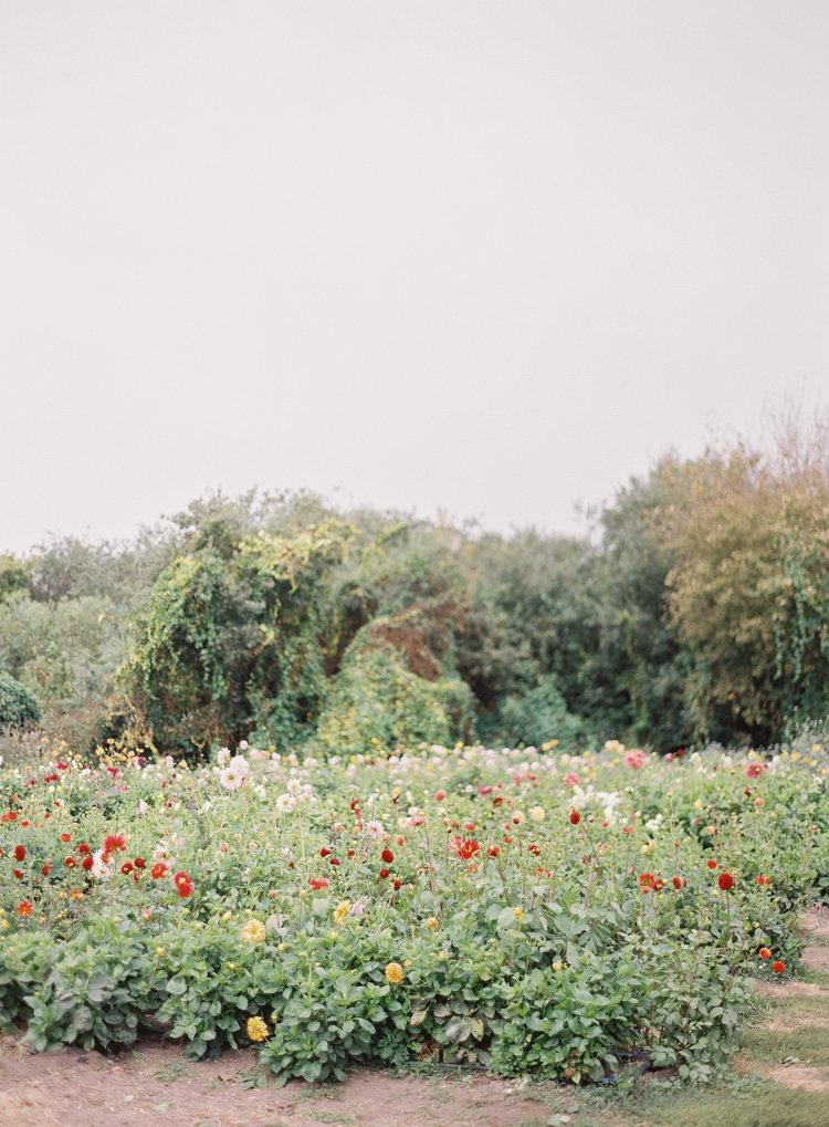 The Pescadero Flowery — Nathalie Cheng