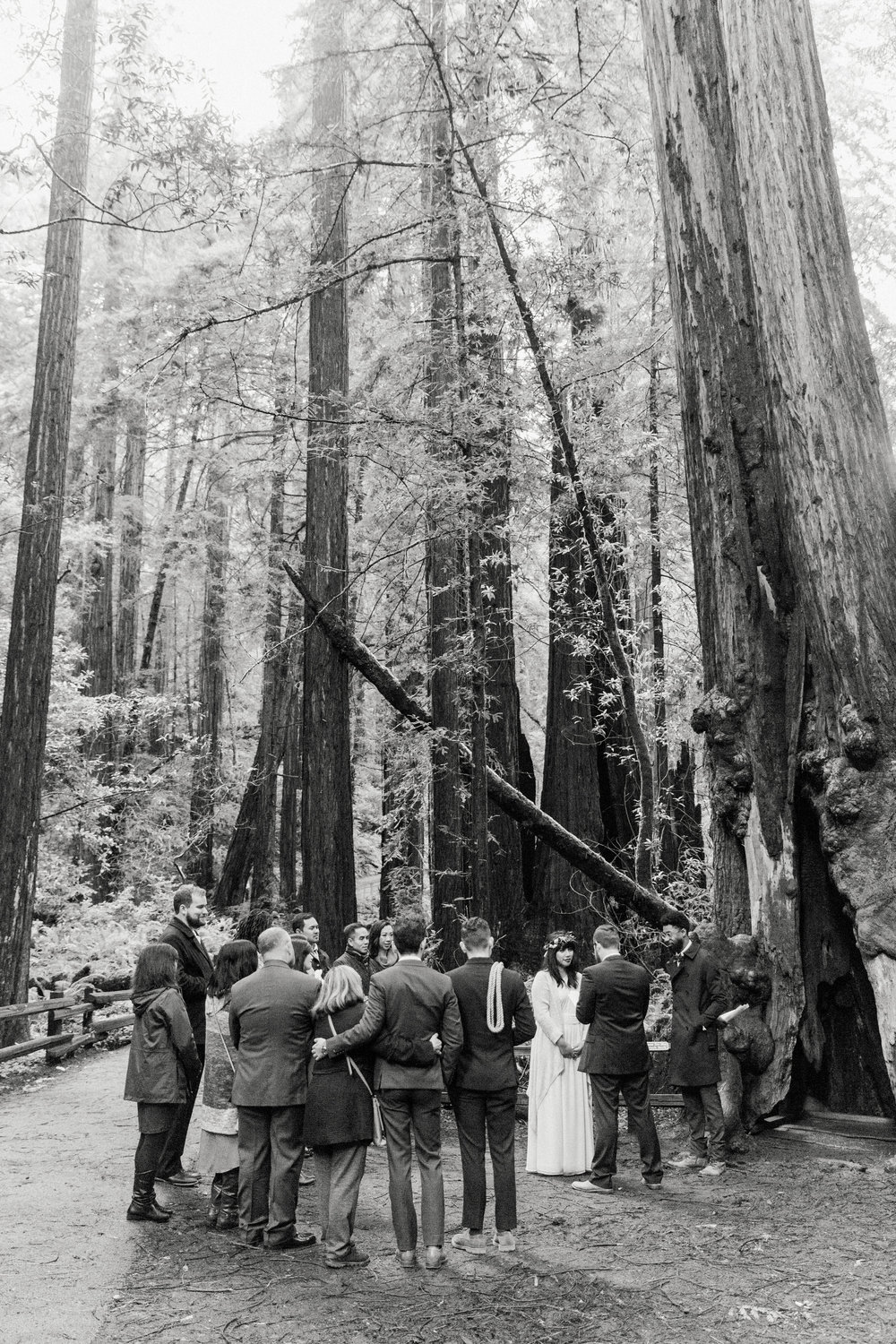 CA_Wedding_Muir_Woods_149.jpg