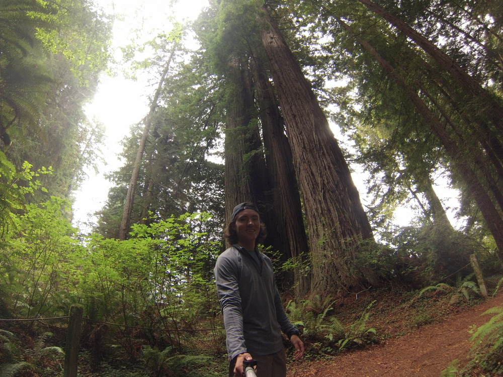 Running in Redwood National Forest