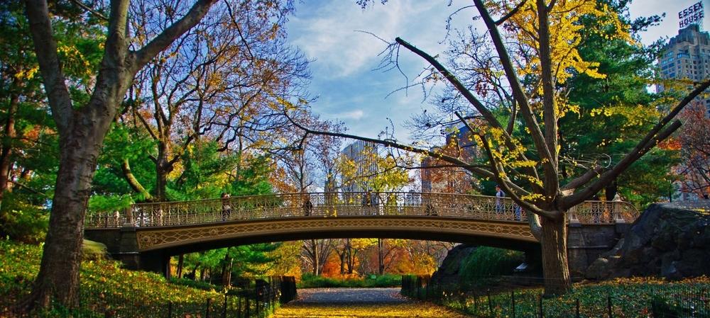 One of the park's 36 bridges