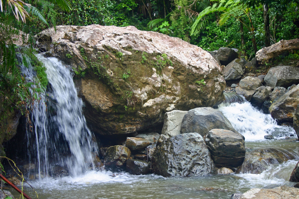 Rainforest Waterfall El Yunque Forest PR S.jpg