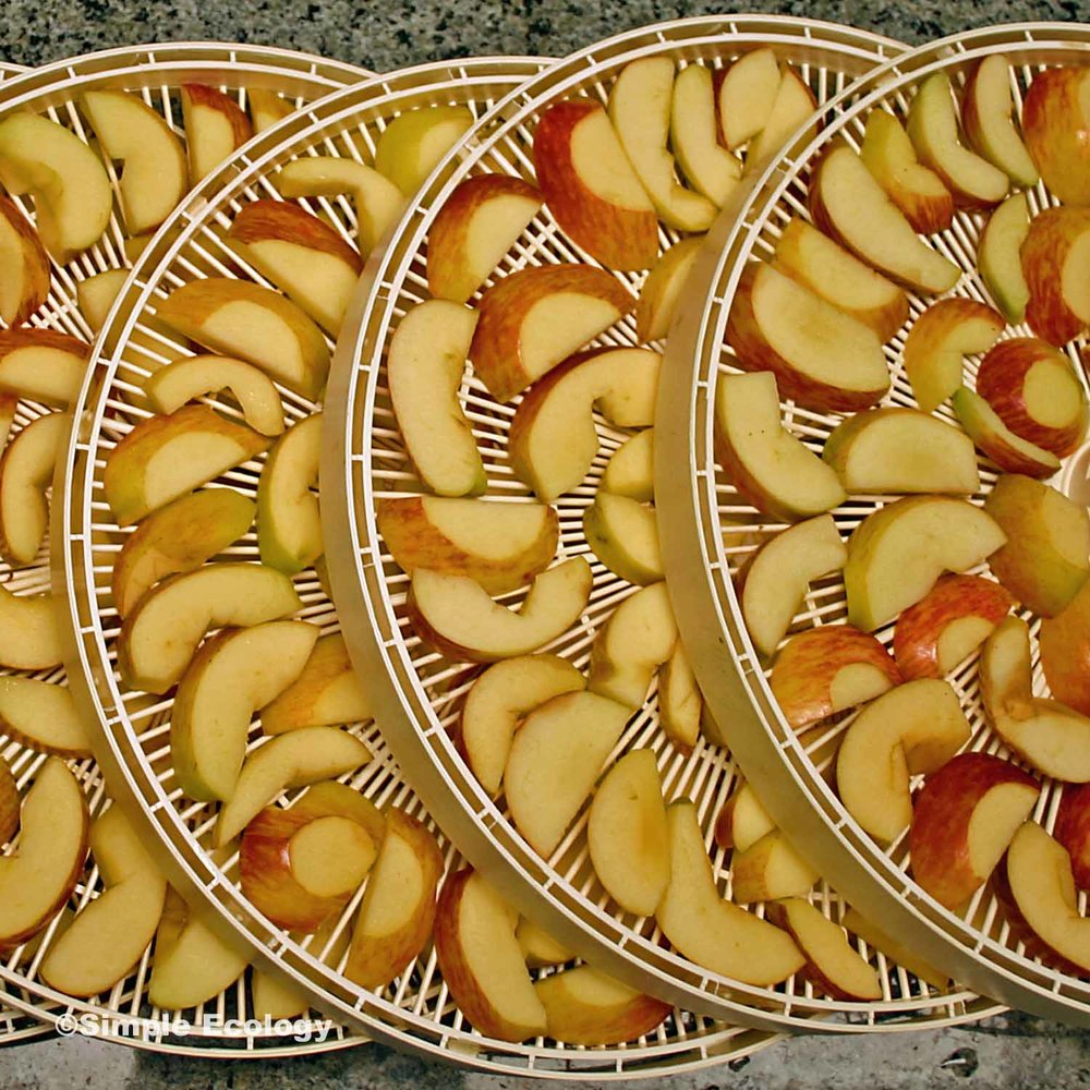 Dehydrating Apples SW.jpg