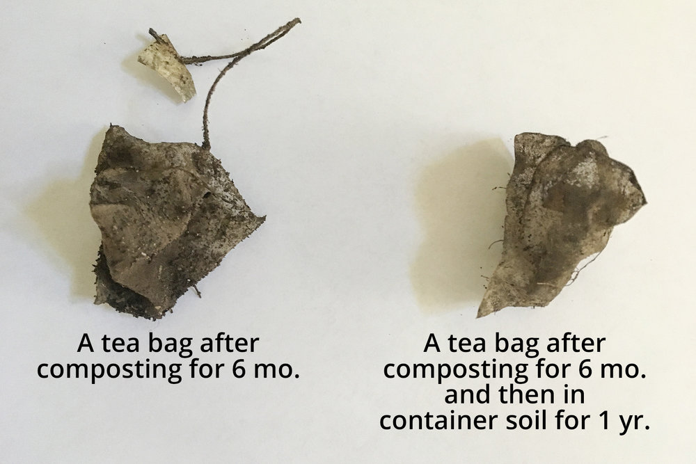 Tea bags found in composter and container soil