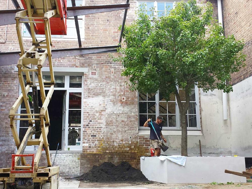 Outdoor Establishments - Advanced Tree Installation Redfern, Sydney, Australia
