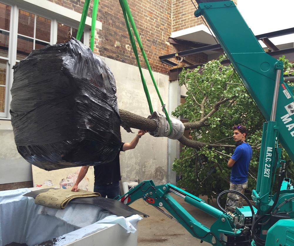 Outdoor Establishments - Advanced Tree Installation