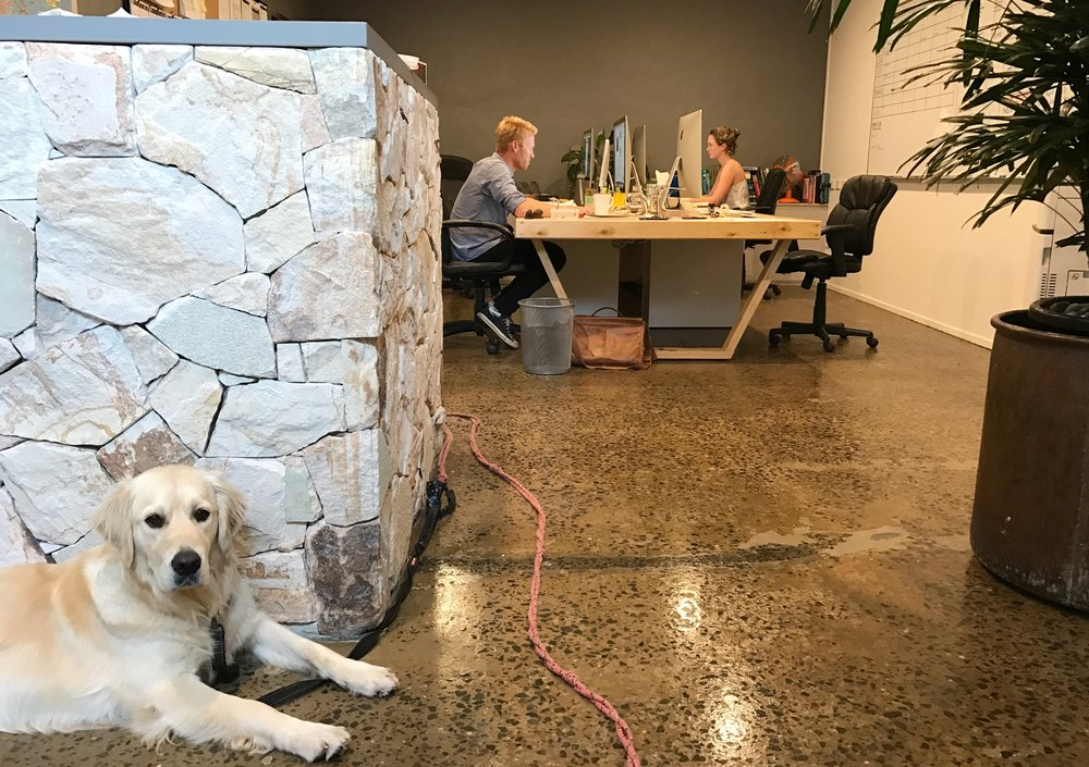 Bob, the office golden retriever gave the new studio space the tick of approval.