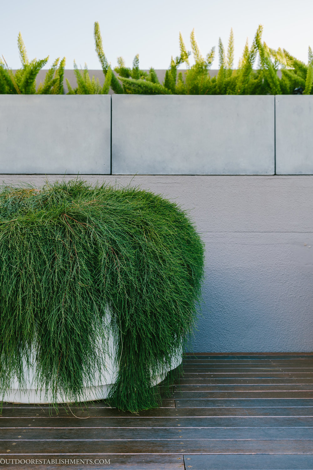 Rooftop garden planting design Outdoor Establishments