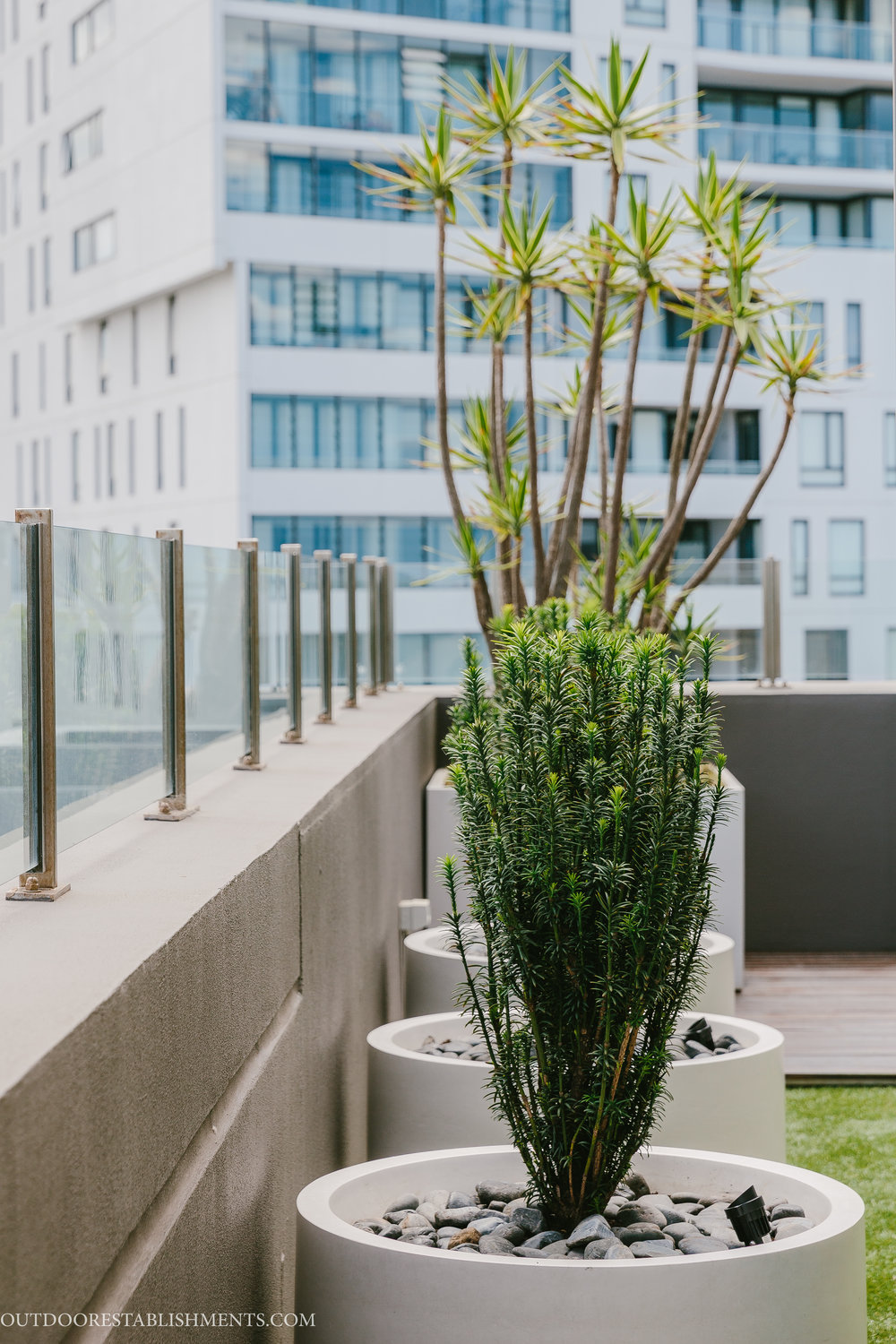 Architectural planting by Outdoor Establishments