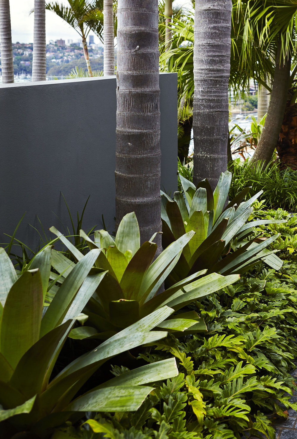 Outdoor Establishments Bromeliad Garden Ideas Blog