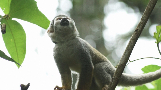 Home to 10% of the world's known species, we had no shortage of animal encounters on our trip to the Amazon.