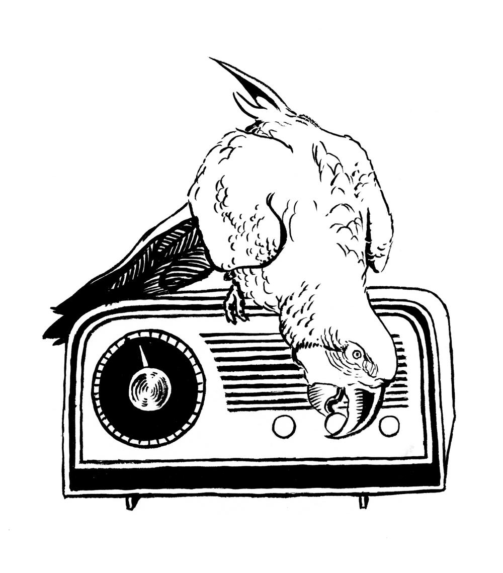 parrot_radio.jpg