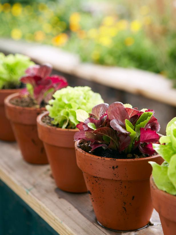 Lettuce Pot - Artisan Farm Co