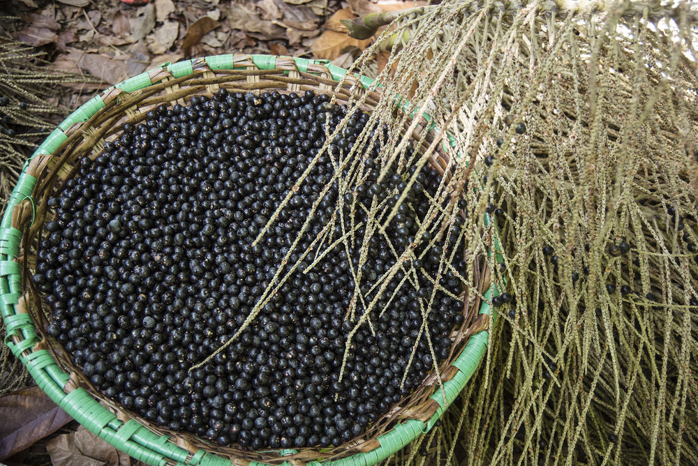 Selected basket of organic Açaí berries