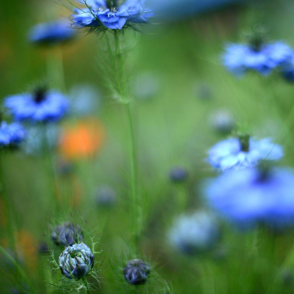 nature_flora_9_jardin_français_2.jpg