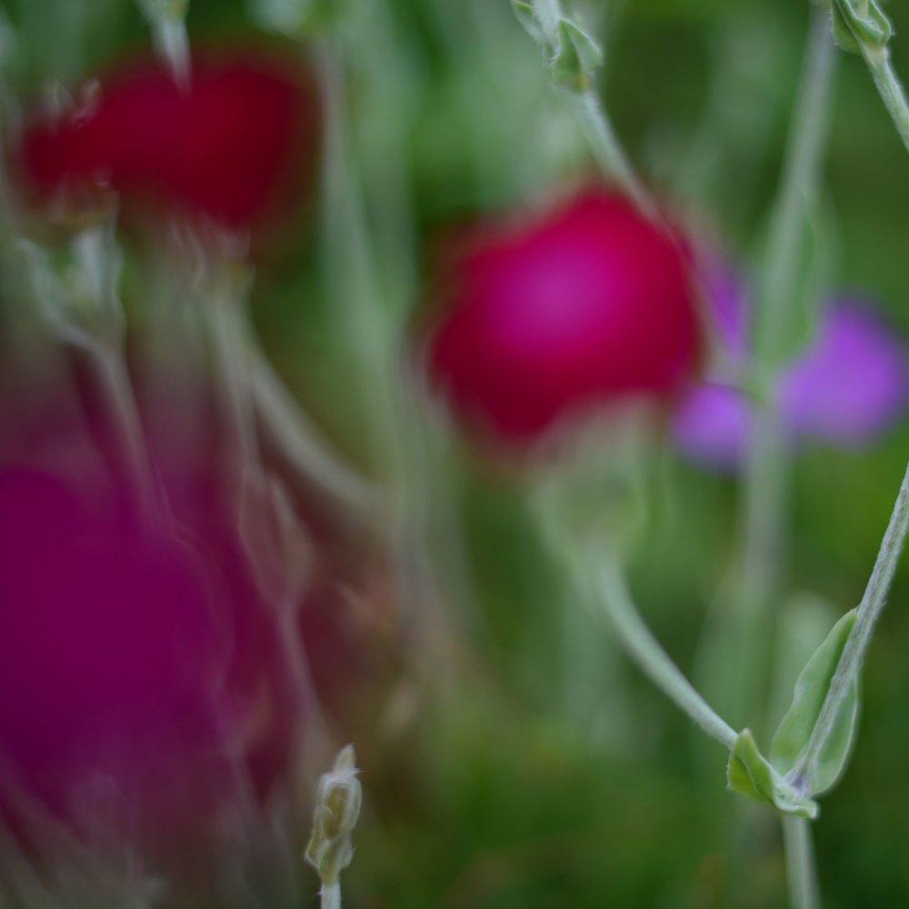 nature_flora_9_jardin_français_5.jpg