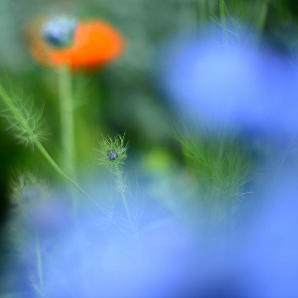 nature_flora_9_jardin_français_8.jpg