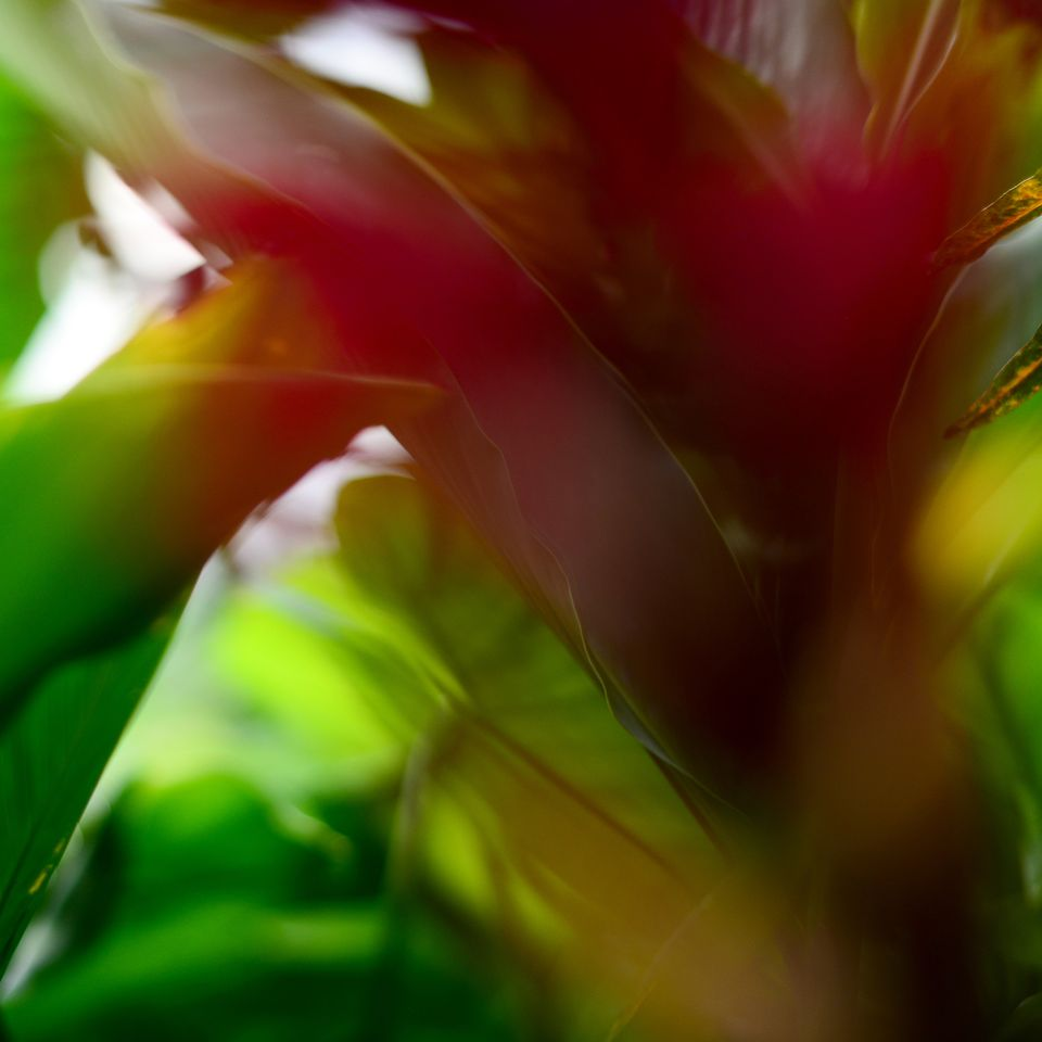 nature_flora_4_8x8_nicaragua_tropicale_2.jpg