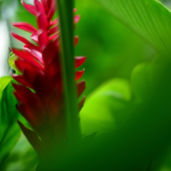 nature_flora_4_nicaragua_tropicale_1a.jpg