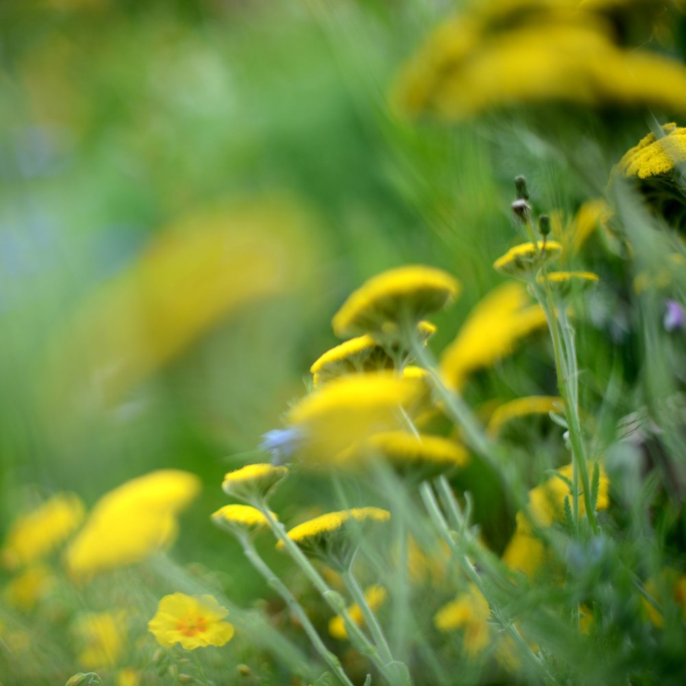 nature_flora_9_jardin_français_3.jpg