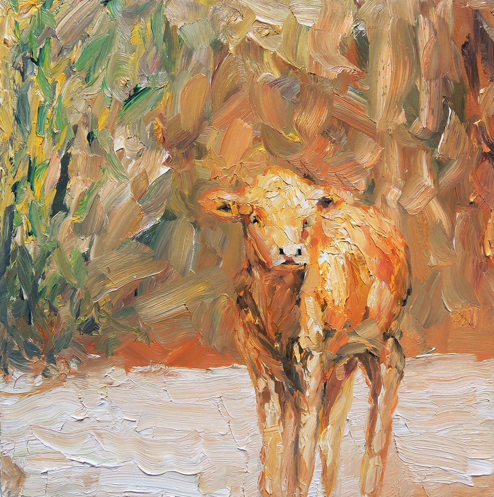 cow 1.jpg