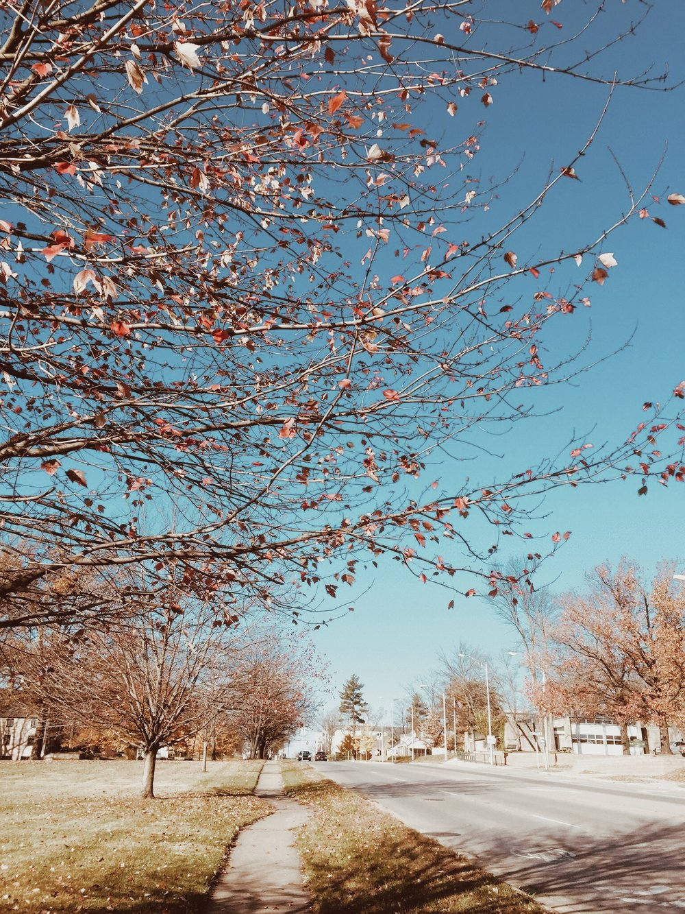 Indiana University / 印第安納大學的秋天