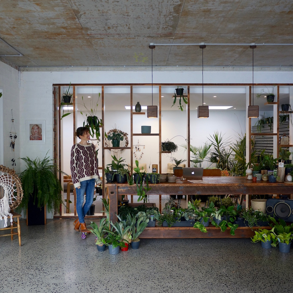 stylist design house plant seeds. DSC03626 jpg TWO QUIRKY BIRDS THE PLANT ROOM