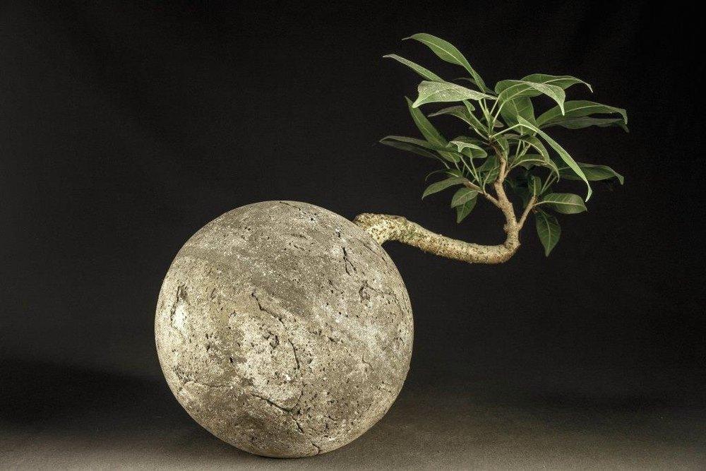 by-luke-mansini-bonsai-horizontal_29085380653_o.jpg