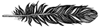 black-heron-feather.png