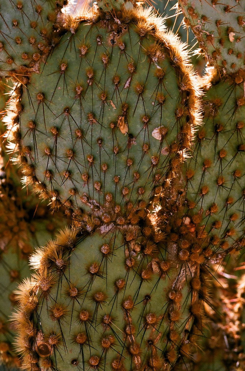 cameliamanea-cactus-texture.jpg
