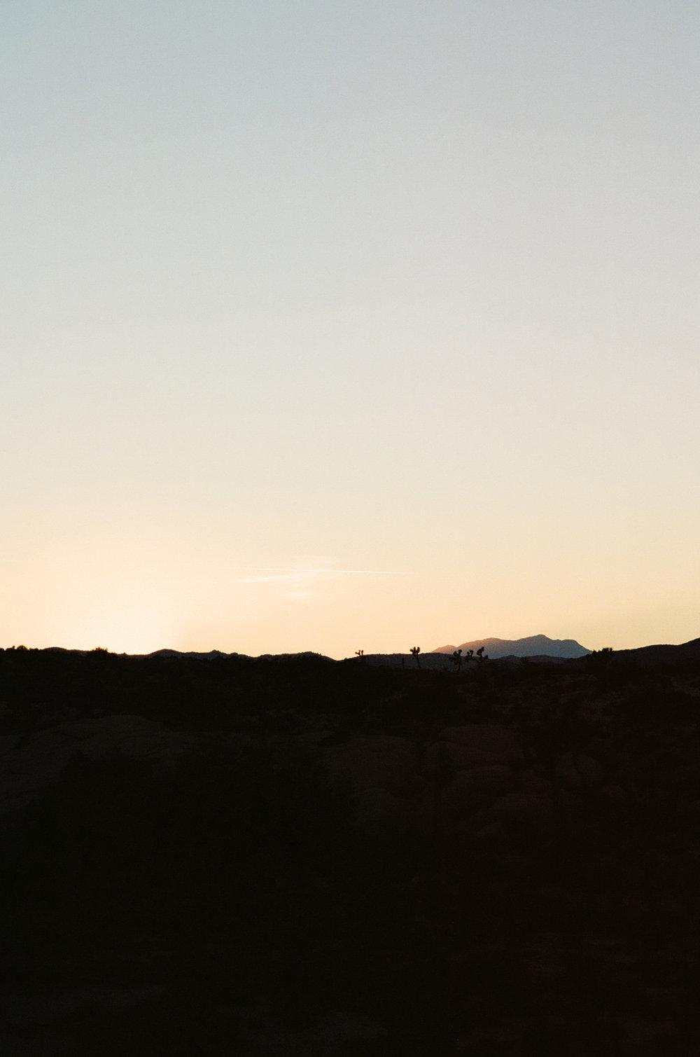 silhouette-sunset-joshua-tree-cameliamanea.jpg
