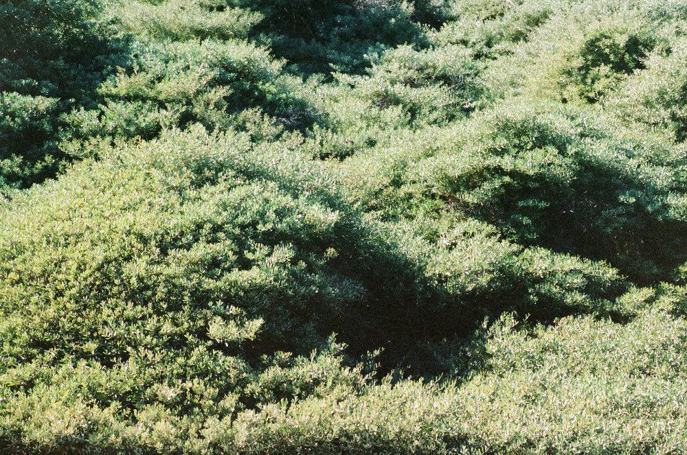 green-plants-texture-2-cameliamanea.jpg