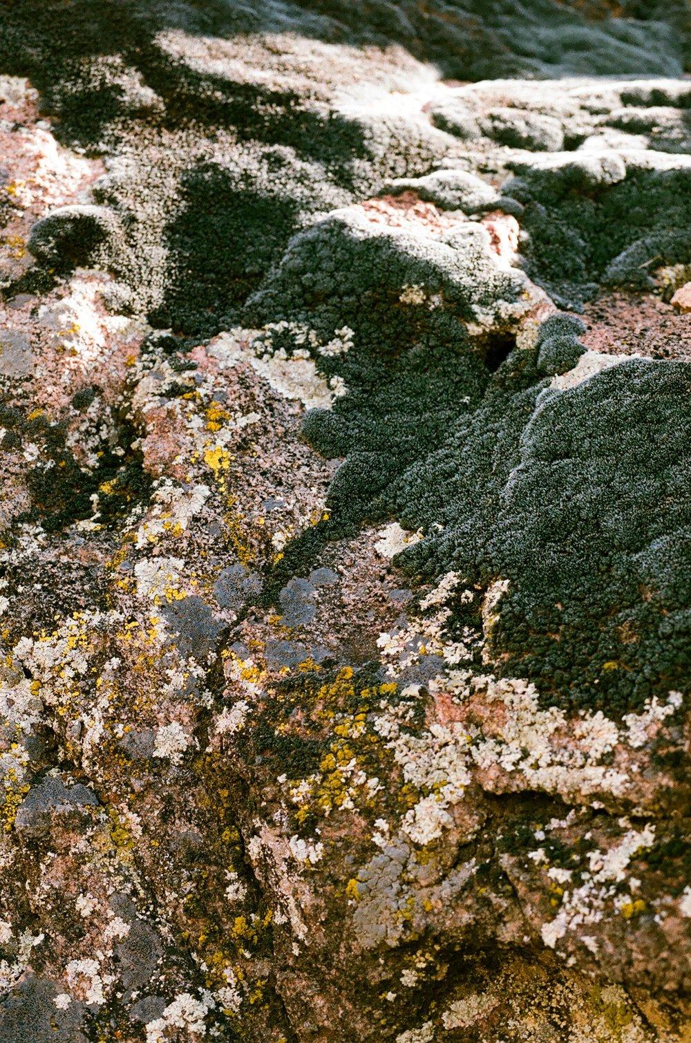 cameliamanea-moss-texture_preview.jpg
