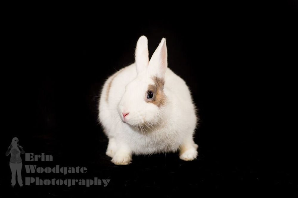 Pebbles (Photo credit: Erin Woodgate Photography)