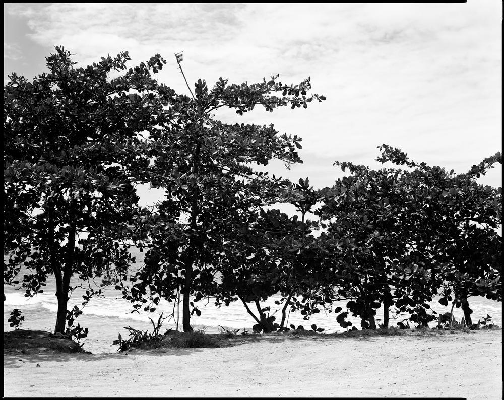 beach_trees.jpg