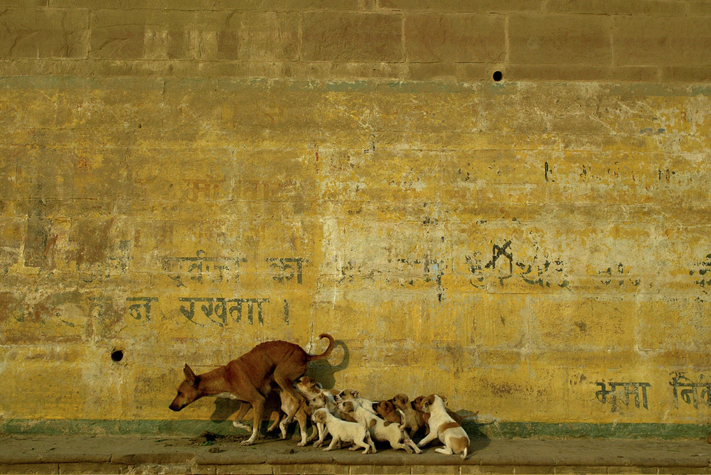 India104.jpg