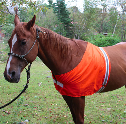 Safety Horse Vest   <<BUY NOW>>