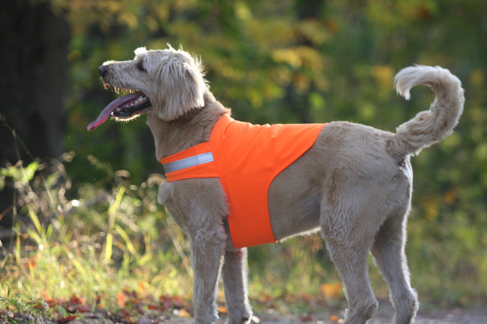 High quality Dog Not Gone Safety Dog Vest.