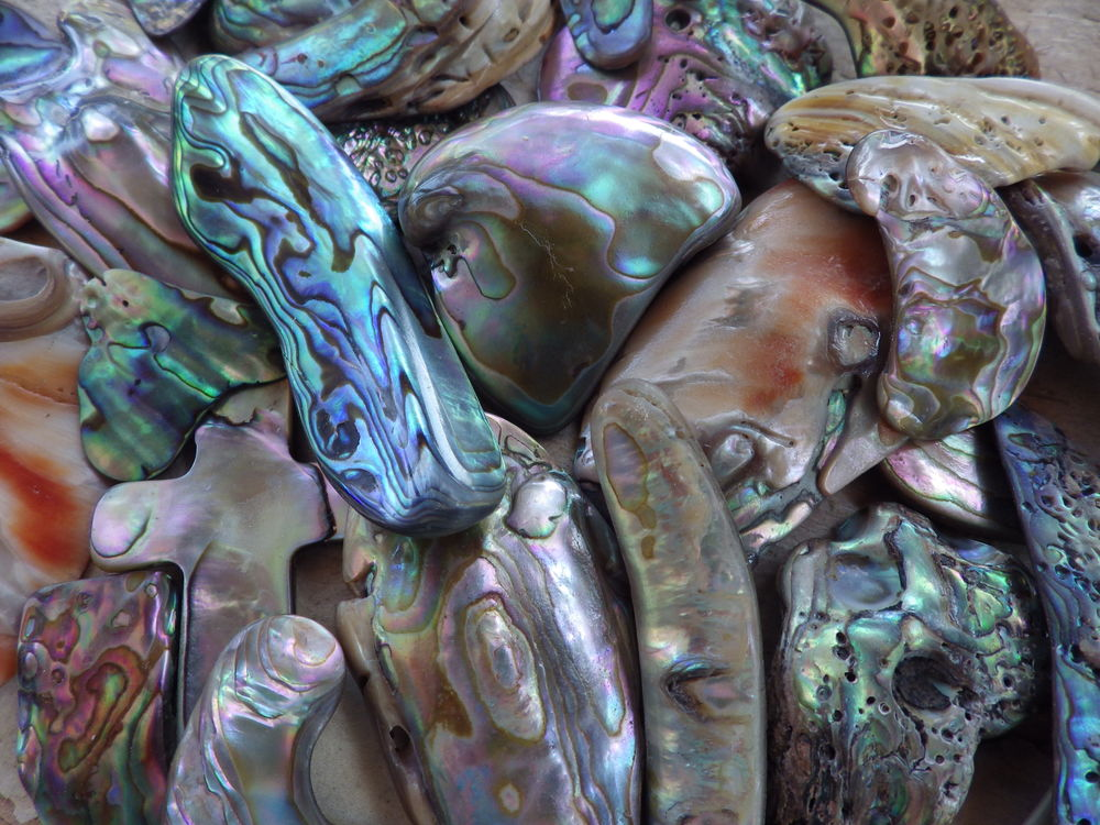 shellsheader2.jpg