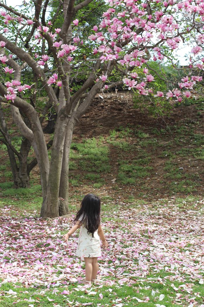 spring-cherry-blossoms-lorelai