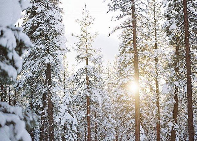 It's looking like it's going to be a very white Christmas at Cedar Crest Cottages!! ❄️☃️🎄 photo via @westshoretahoe #whitechristmas #laketahoe #cedarcrestcottages #travel #snow #wanderlust