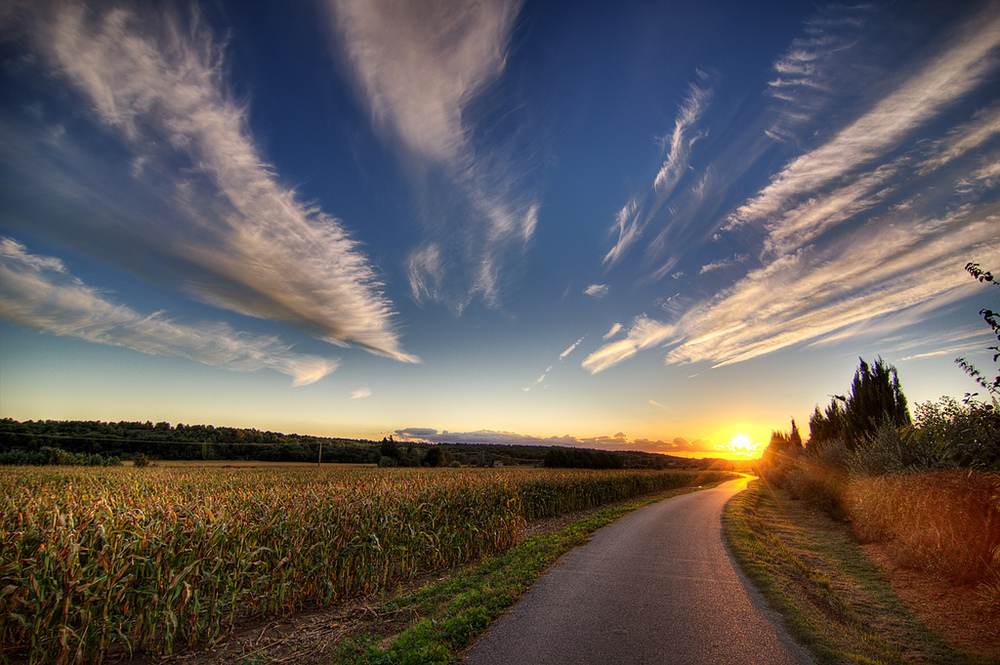 La route vers le champ de maïs au coucher du soleil. Photo by decar66 via Flickr CCL.