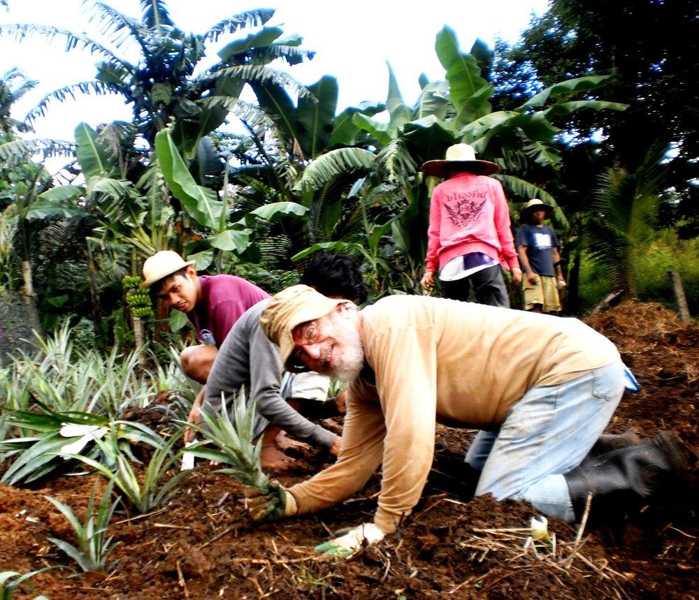 BJS planting pineapples.jpg