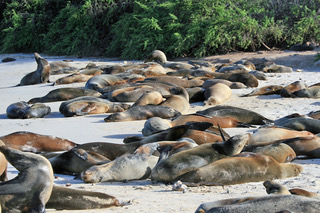 Seals on Santa Fe Beach.jpeg
