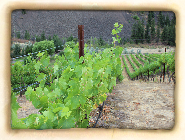 Vineyard-slide4.jpg