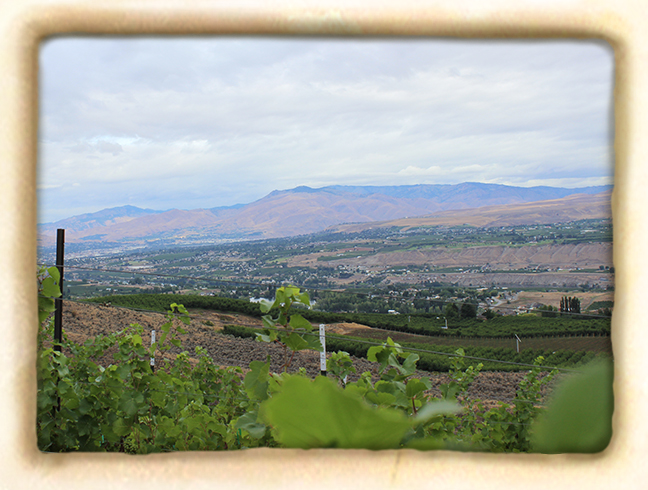 Vineyard-slide7.jpg