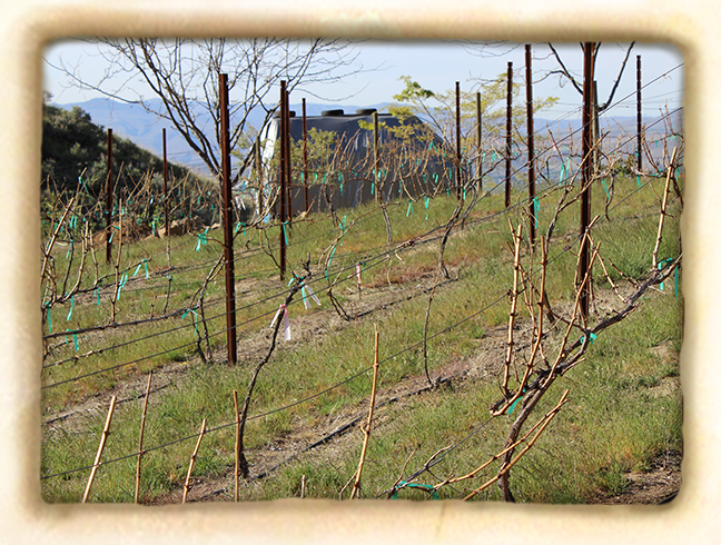 Vineyard-slide6.jpg