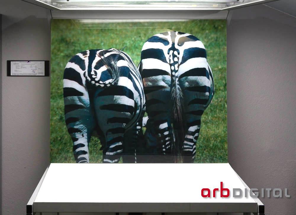 zebra bottoms.jpg