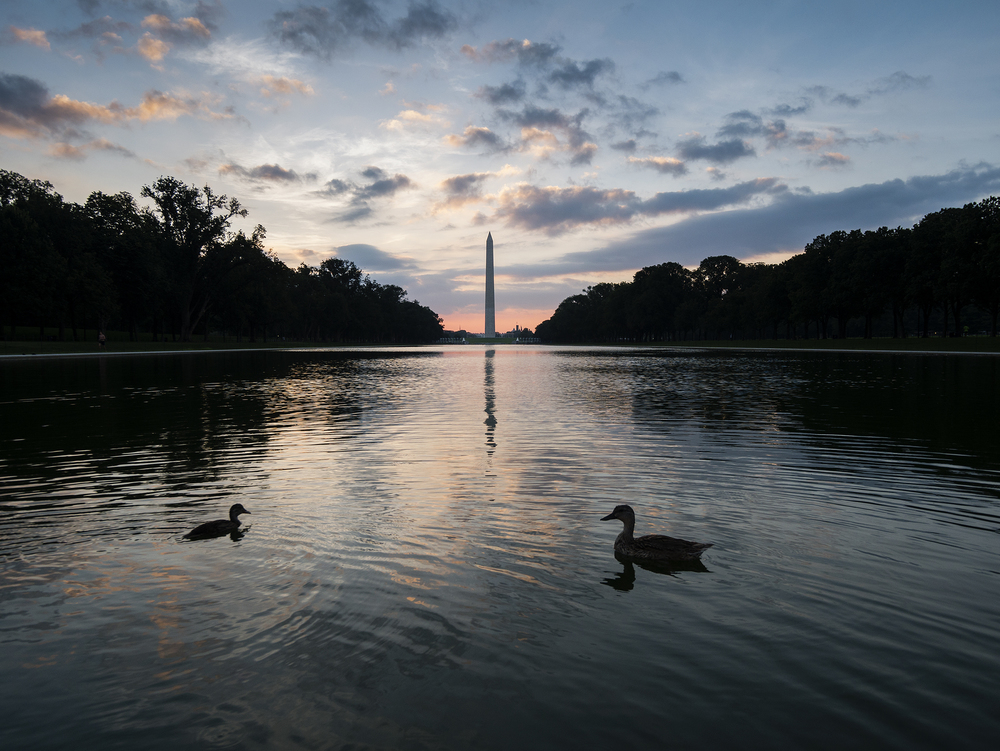dc_ducks_1050493.jpg