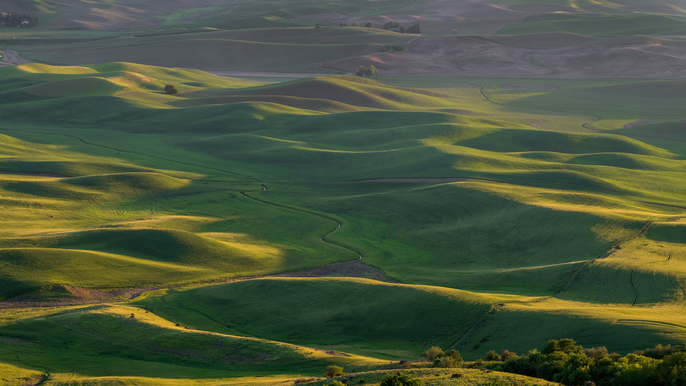 Lone Tree at Sunset: Palouse from Steptoe Butte, WHI (WA) EQ: D800, 70-200mm f/4.0   Taken: 6-5-2017 at 19:17 Settings: 120mm, 1/125s, f/9.0, ISO640, 0EV         Conditions: Clear