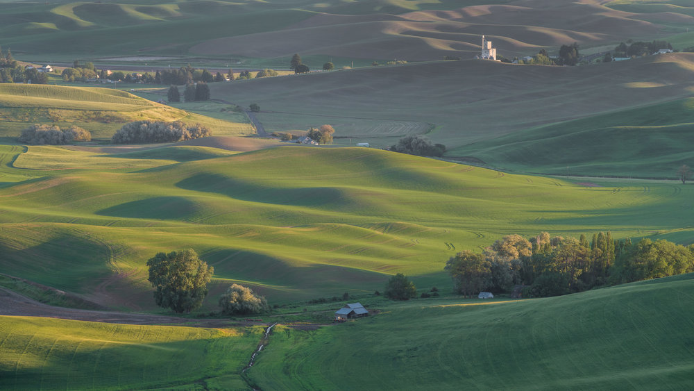 Palouse Hills from Steptoe Butte (WA)